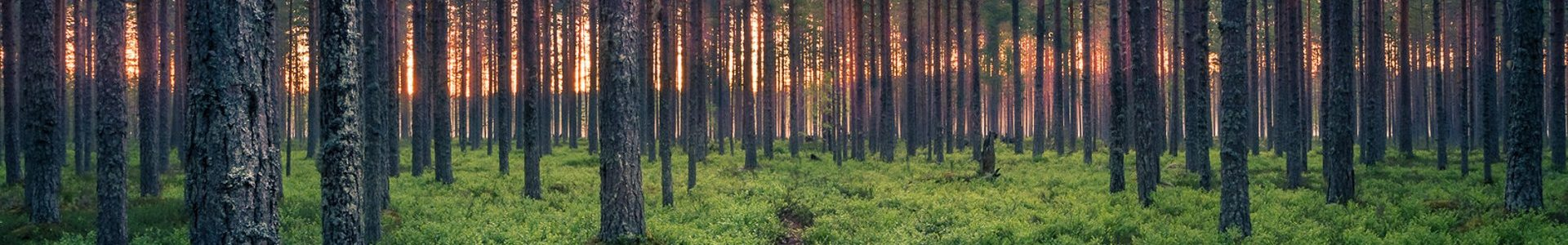 Baltic Wood Partner